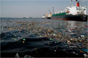 Polluted seas